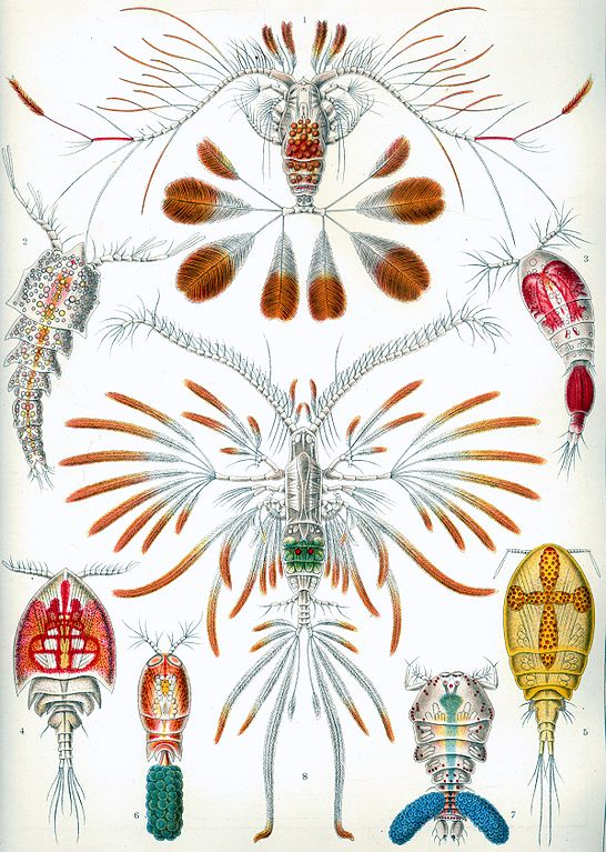 Color plate showing copepods, from https://en.wikipedia.org/wiki/File:Haeckel_Copepoda.jpg