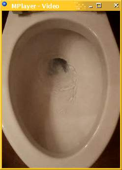 Video frame from a downloadable MPEG movie of a flushing toilet.